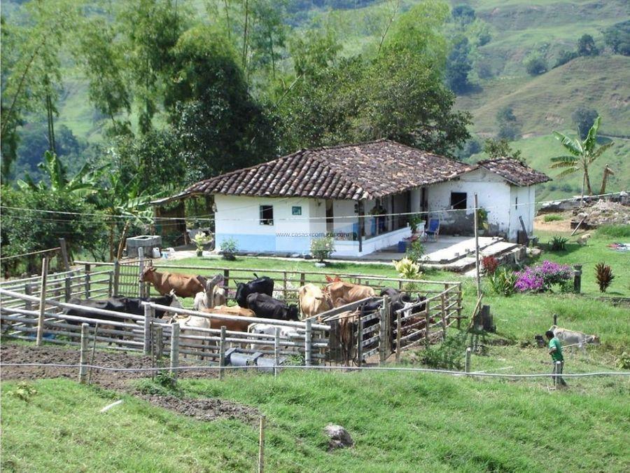 finca en venta vereda el cuzco montengro quindio