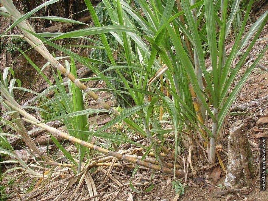 el cocaventaultimo terreno agricola de 3 has
