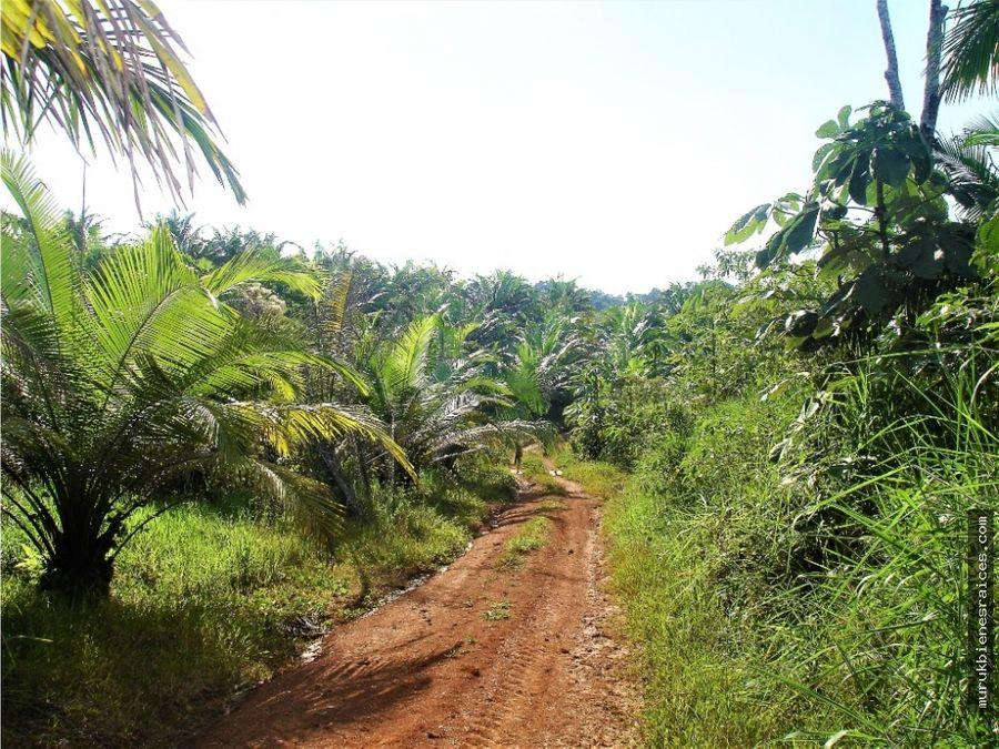 el cocaventafinca palmera 94 hectareas