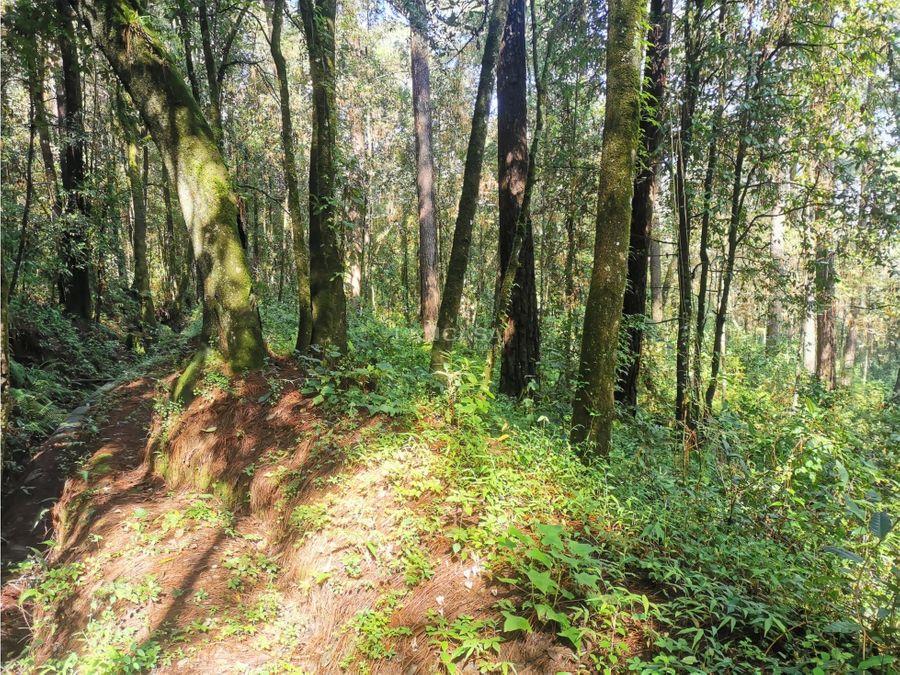 terreno con arroyo en el bosque