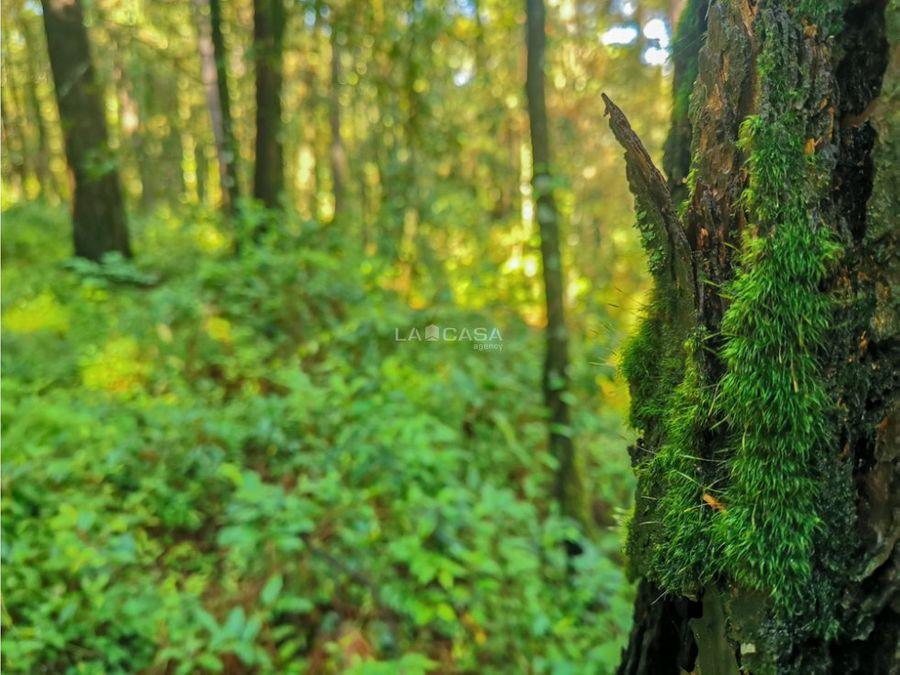 terreno en el bosque de valle de bravo