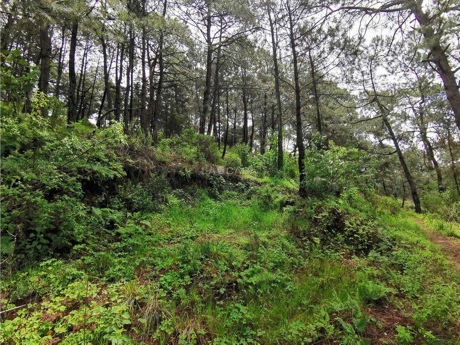 terreno boscoso con vista parcial al lago
