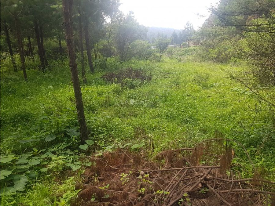 terreno envuelto de naturaleza