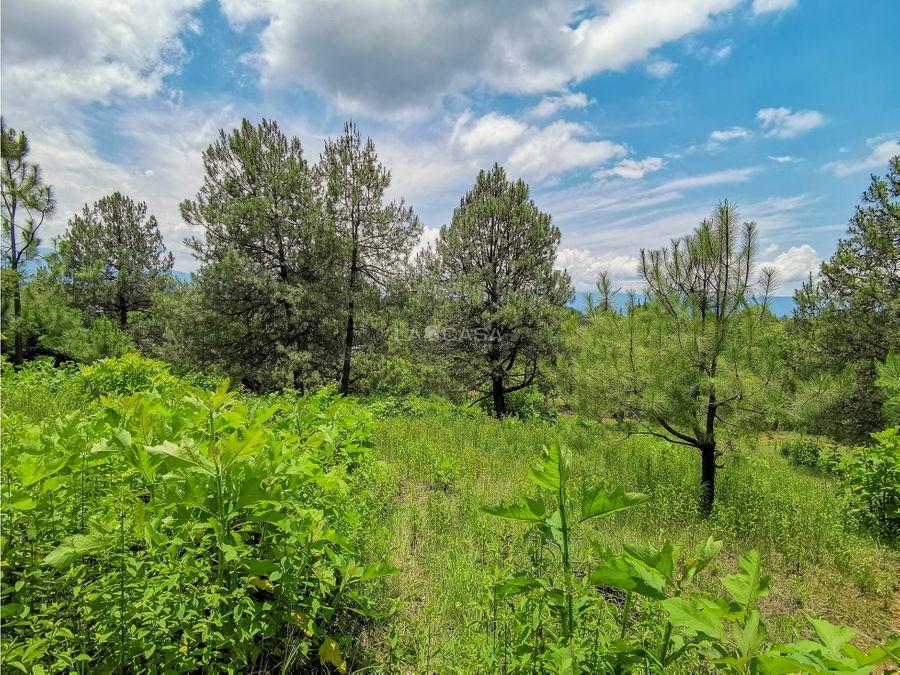terreno boscoso a precio de oportunidad valle de bravo