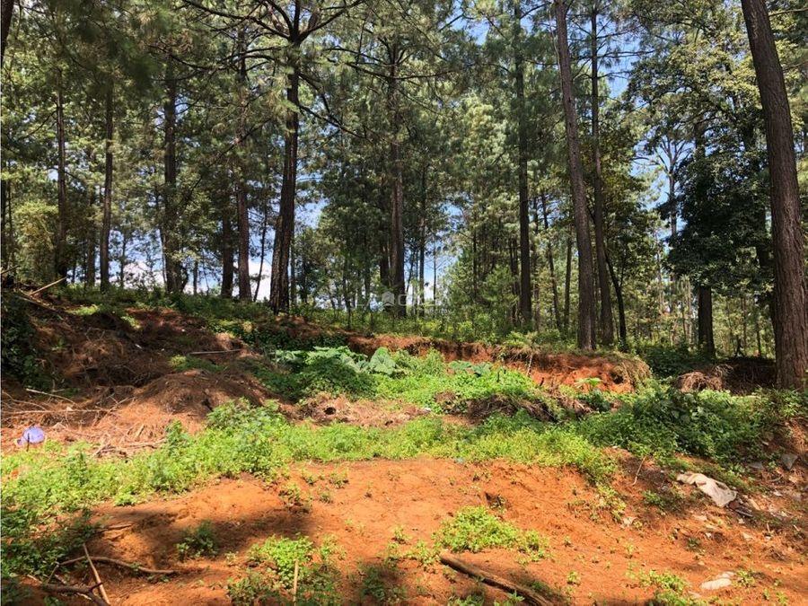 terreno boscoso