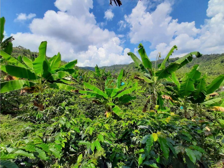 venta finca productora de cafe y platano chinchina sector el trebol