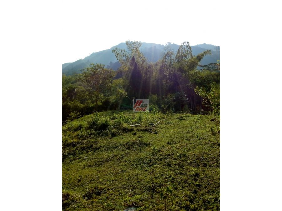 se vende lote sector chinchina 5000 mtrs2