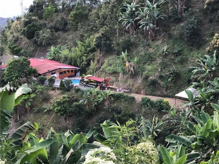 venta de finca productora cafe aguacate y platano sector la cabana
