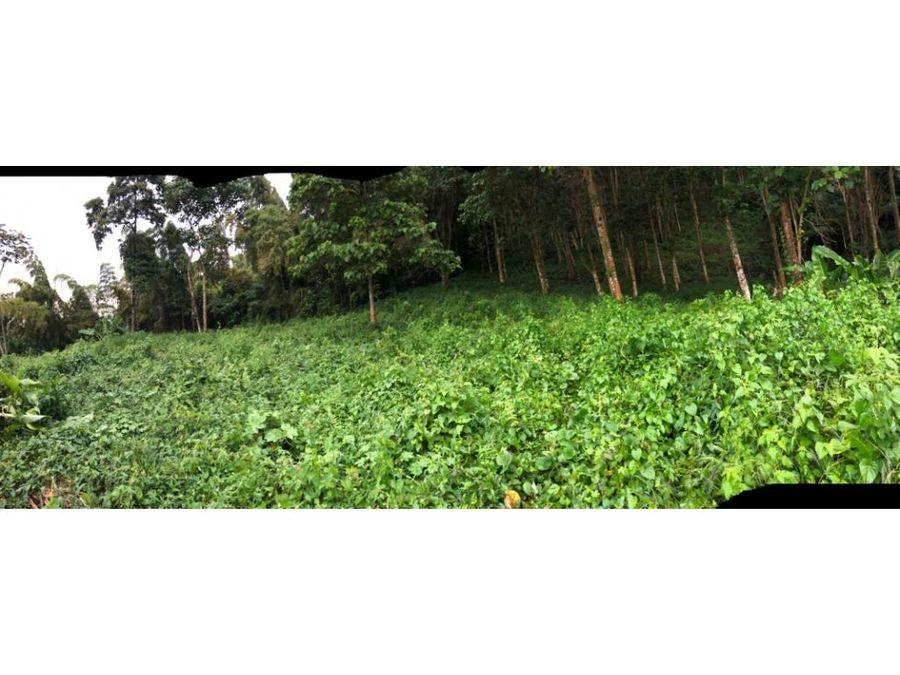 venta finca productora de cafe y heliconias area 82 hectareas