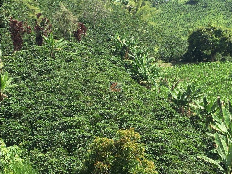 venta de finca productora de cafe sector el chuzcal