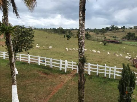 470 hectares farm for cattle raising and more
