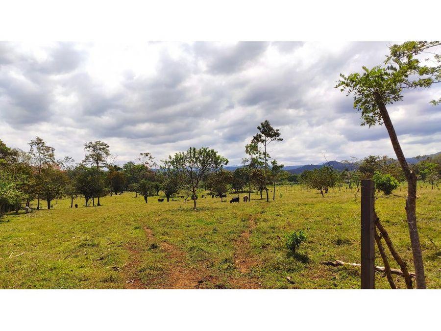 terreno 17495m2 venta valle azul san ramon km33