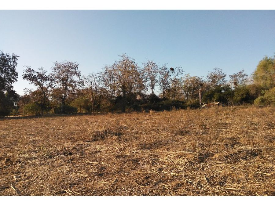 terreno agricola en rabuco 5000m2