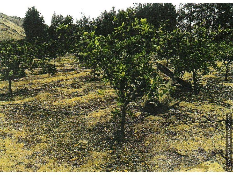 terreno agricola 33 has santa rosa pampa bonita barranca