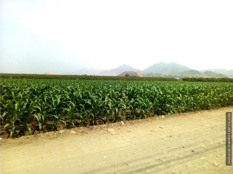 terreno agricola 433has cp los laureles chancay huaral lima