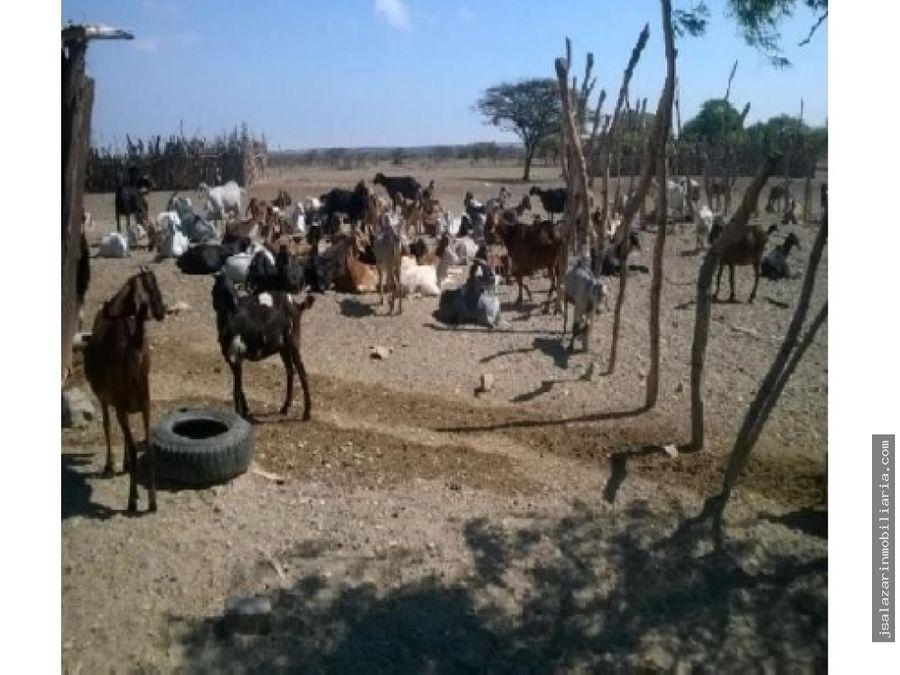 terreno eriazo de 4000 has sector vega honda catacaos piura