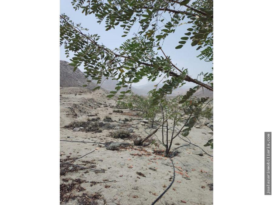 terreno agricola 26 has quilca palpa aucallama huaral lima