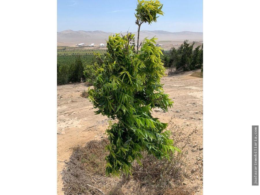 venta terreno agricola 100017 has huaura huacho lima