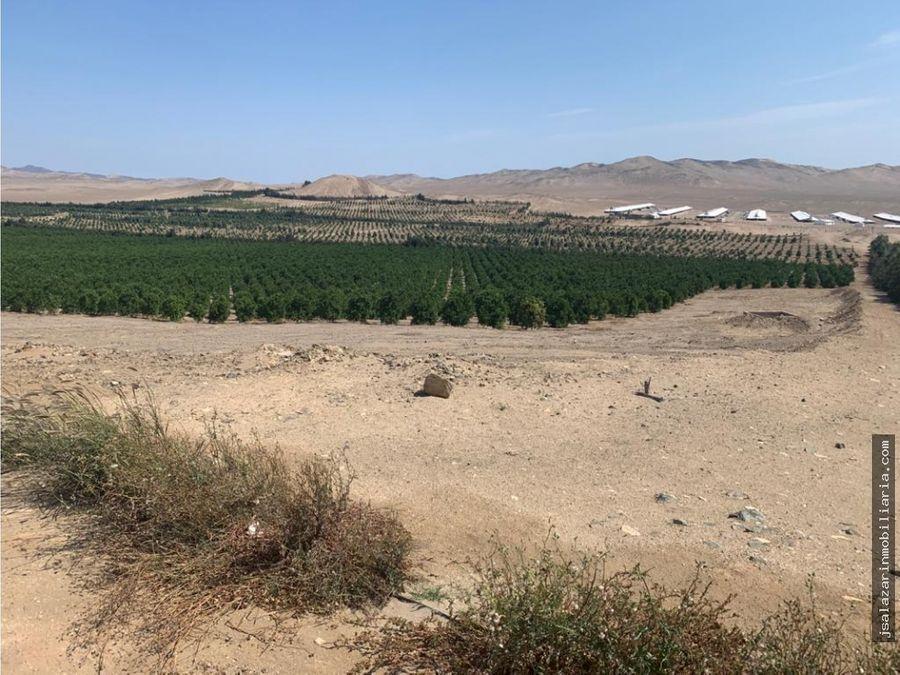 terreno agricola 1000 has santa maria la tablada huaura lima