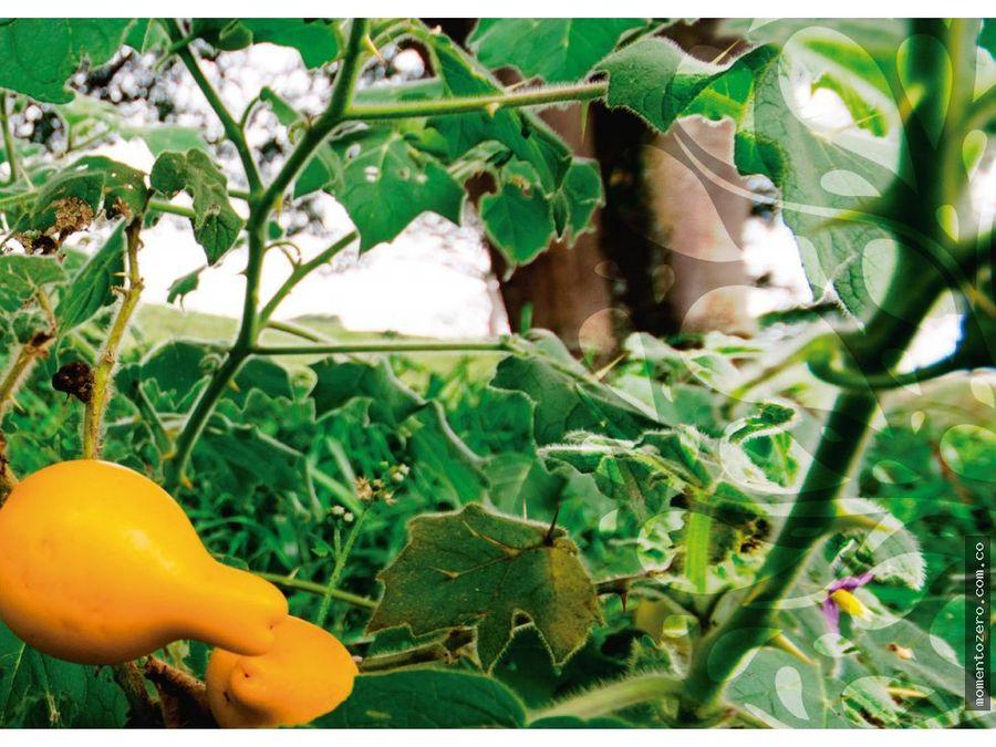 venta lotes via cerritos a cartago cerca a pereira