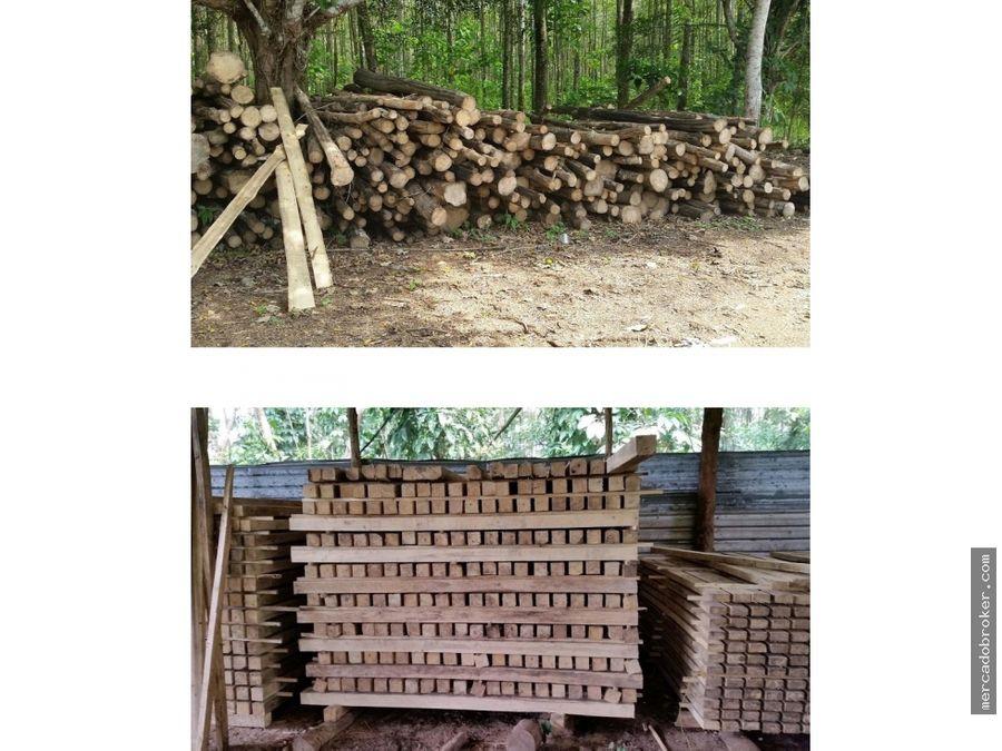 venta de rancho de limon hule y madera melina en tabasco
