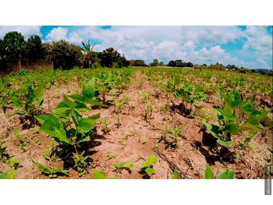 ancoven premium vende finca en taguanes