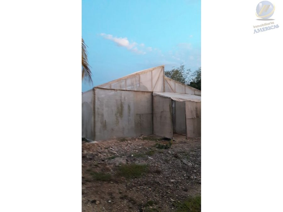 terreno preparado para siembra chicxulub pueblo