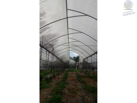 terreno con invernadero en chicxulub pueblo