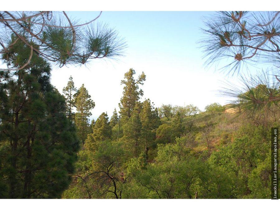 venta de terreno con pinos en garafia