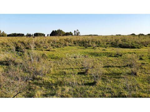 campo 365 hectareas ganadero a 80kms de montevideo