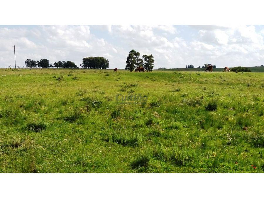 campo armado 49 has ganadero agricola en florida