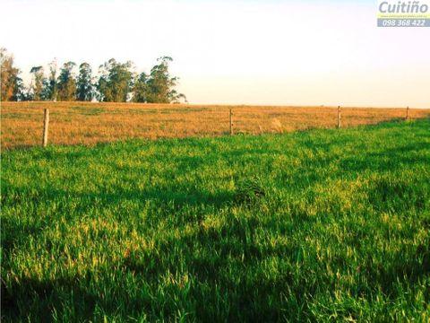 campo 9 has buena tierra agricola acceso y ute