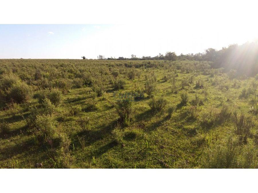 campo 11 has agricola con canada