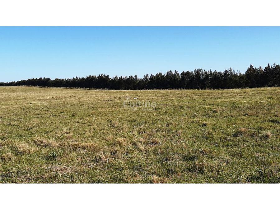 hermosas chacras de 3 y 4 hectareas en tala