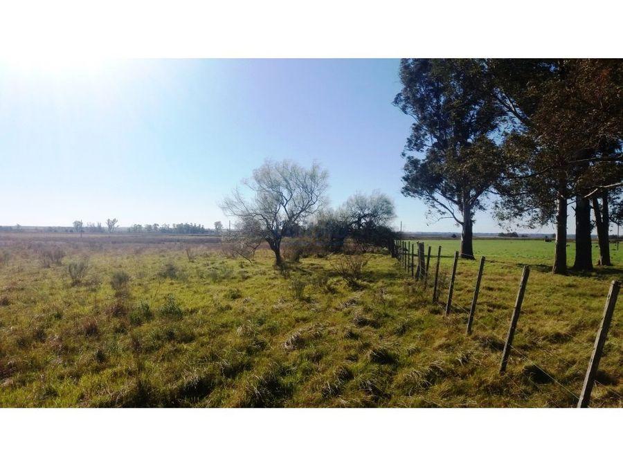 campo 32 hectareas agricola coneat 150 san ramon