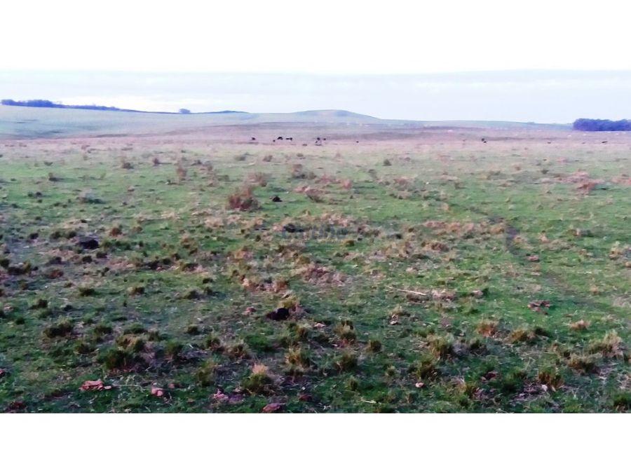 campo 60 has perfil ganadero forestal lavalleja