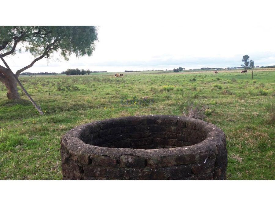 campo 14 y 12 has agricola vivienda y ute