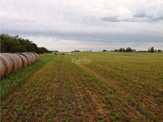 campo agricola 64 has coneat promedio 148