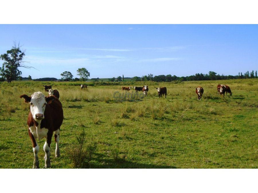 campo 42 hectareas agricola bueno en migues