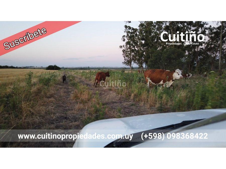 campo 60 has agricola con rio lavalleja