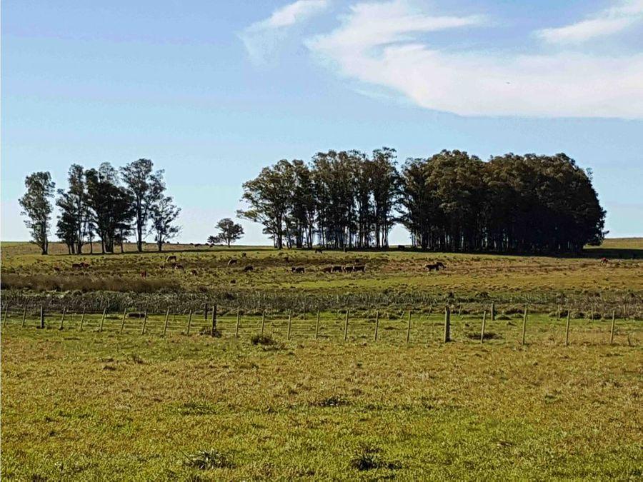 campo 558 has establecimiento agricola durazno