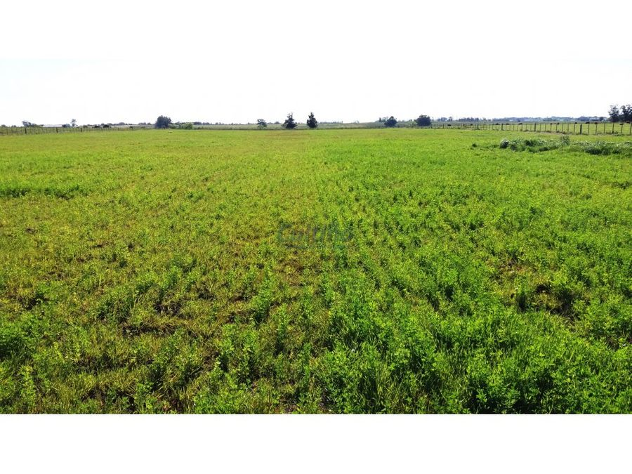campo 5 y 12 has buena tierra y aguada natural