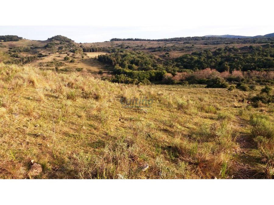 campo 142 hectareas ganadero forestal lavalleja
