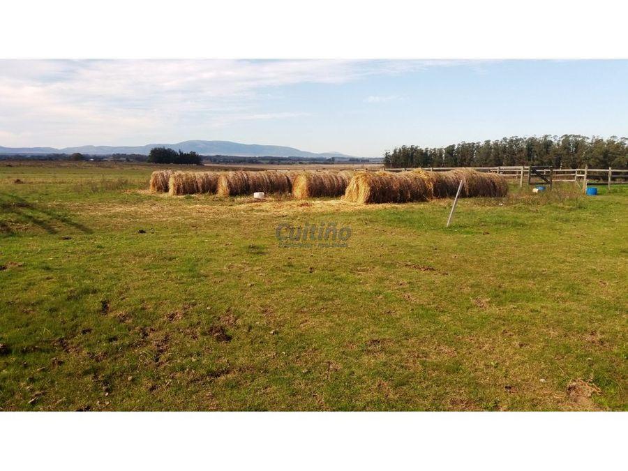 campo 50 hectareas con haras en maldonado