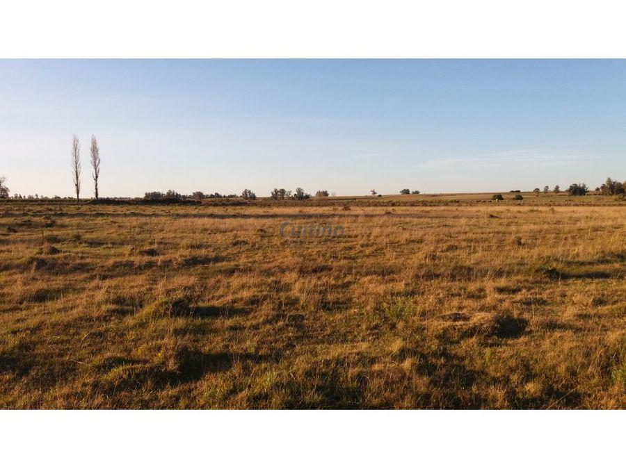 campo 11 12 has agricola casa y ute lavalleja