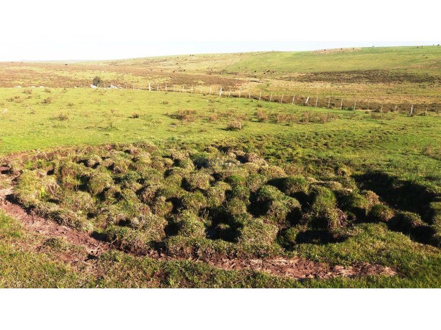 campo 32 has ganadero forestal lavalleja