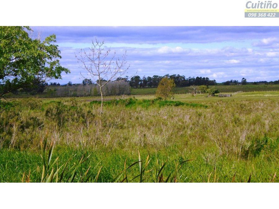 lindo campito terreno rural de 1 hectarea en tala