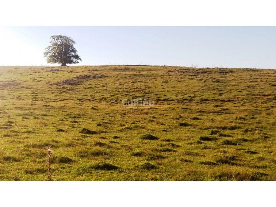 campo 17 hectareas excelente ganadero en florida