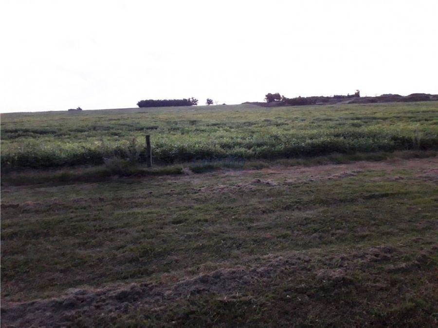 campo 111 hectareas con tambo en soriano