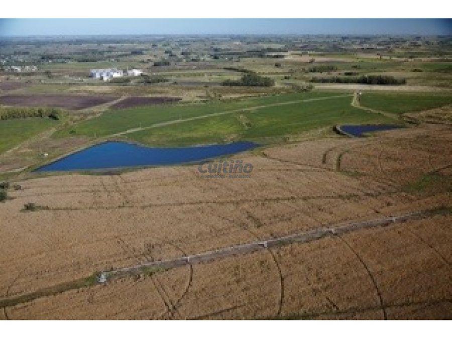 campo 757 hectareas excelente establecimiento